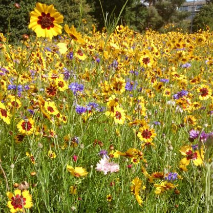 wild flowers colour boost