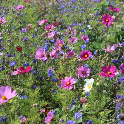 wild flowers festival mix