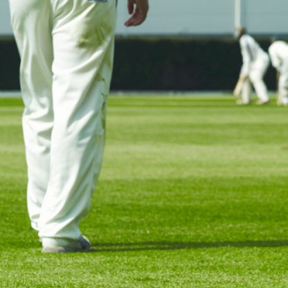 top seed cricket grass