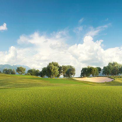 top seed golf fairway grass