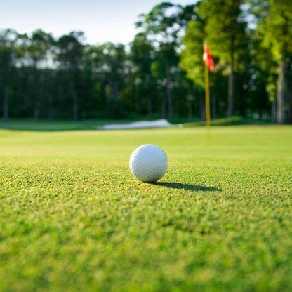 top seed golf green grass