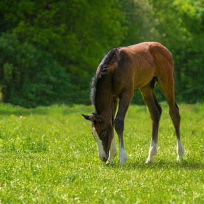 top seed horse paddocks grass