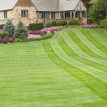 top seed landscape grass