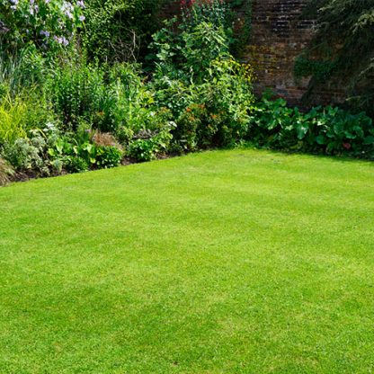 top seed lawn grass