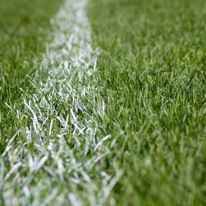 top seed sport grass
